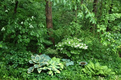 Woodland after rain