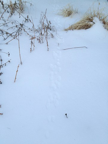 The bunny trail
