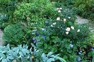 Peach and blue garden