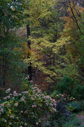 autumnwoodlandwp