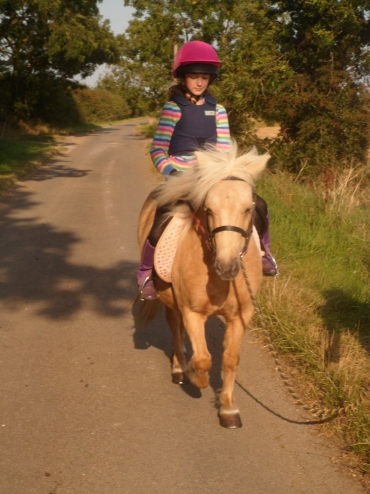 Five star forever home wanted for two experienced driving ponies. Palominos. Matching pair (2/5)