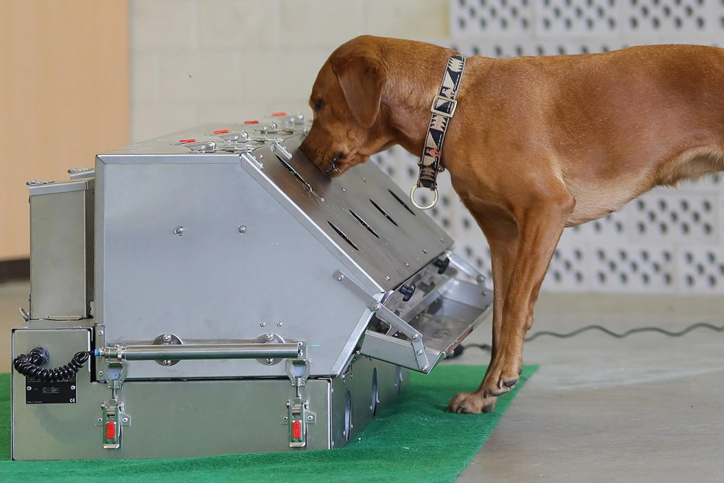 A dog sniffs at a metal contraption.