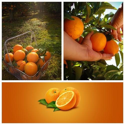 tu naranjo orange3