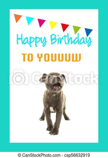 Cute Grey Stafford Terrier Puppy Dog Singing Happy Birthday To You On A Birthday Card On A White Background With Blue Border Canstock