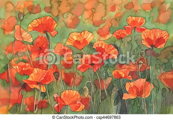 Poppies sunny field watercolor background  Watercolor flowers     poppies sunny field watercolor background   csp44697863