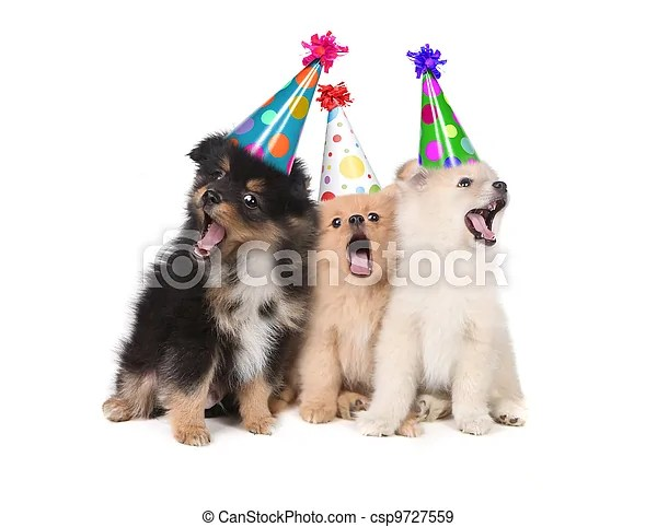 Puppies Singing Happy Birthday Wearing Party Hats Humorous Puppies Singing The Happy Birthday Song Wearing Silly Hats Canstock