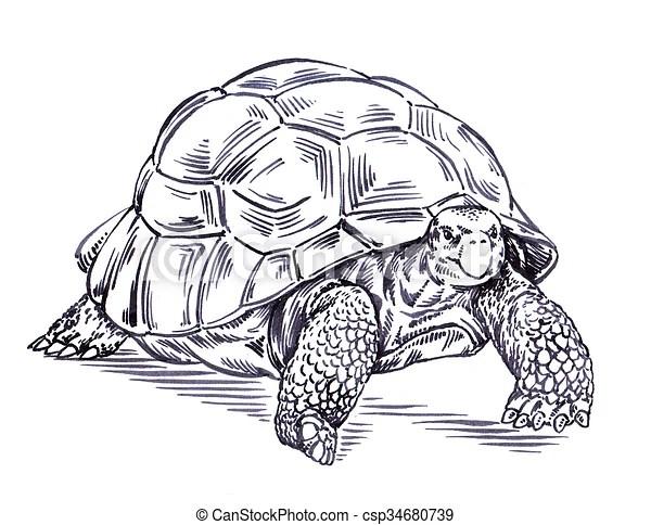 https www canstockphoto fr tortue dessiner graver illustration 34680739 html