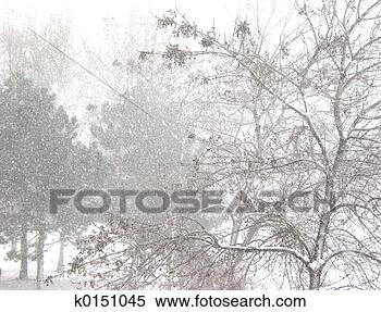 Stock Image - Blizzard and trees. Fotosearch - Search Stock Photos, Mural Pictures, Photographs, and Photo Clipart