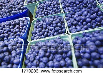 Stock Photo - close-up of blueberries.  fotosearch - search  stock photos,  pictures, images,  and photo clipart