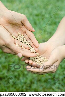 Stock Photo - Hands holding seeds. Fotosearch - Search Stock Photography, Print Pictures, Images, and Photo Clip Art