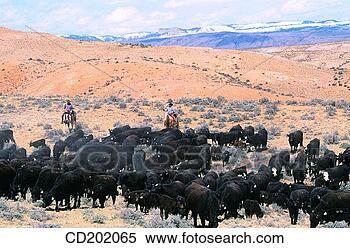 Stock Image - cattle drive utah<br /><br /><br /><br /><br /> usa. fotosearch<br /><br /><br /><br /><br /> - search stock<br /><br /><br /><br /><br /> photos, pictures,<br /><br /><br /><br /><br /> wall murals, images,<br /><br /><br /><br /><br /> and photo clipart