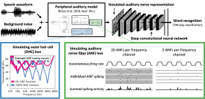 Hearing-impaired artificial neural networks replicate speech recognition deficits of hearing-impaired humans