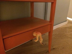 big cat ass drawer handle