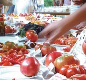 El Comité Andaluz de Agricultura Ecológica reclama a las administraciones donde están los cultivos transgénicos
