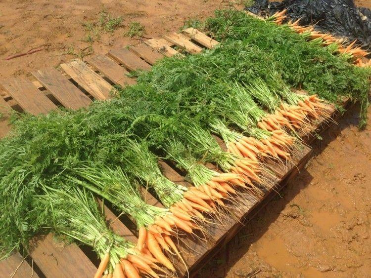 Andalucía sirve de acicate como líder en industrias de agricultura ecológica