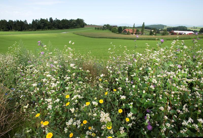 Svizzera biodiversità