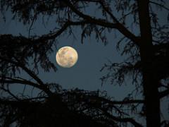 1749860516 a3f3f7d096 m sol luna