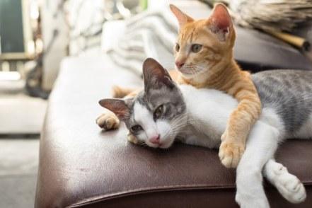 Resultado de imagem para gato animal