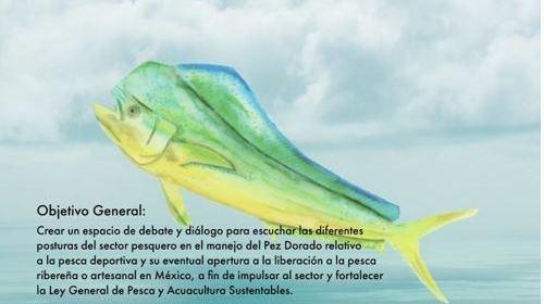 clau - Anuncia diputada Claudia Yañez Centeno, próxima realización de Parlamento abierto sobre el manejo del Pez Dorado – Archivo Digital Colima - #Noticias