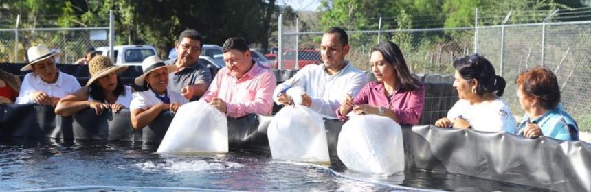 proyecto 3 - Proyecto Emix comienza la venta de tilapias para esta cuaresma - #Noticias
