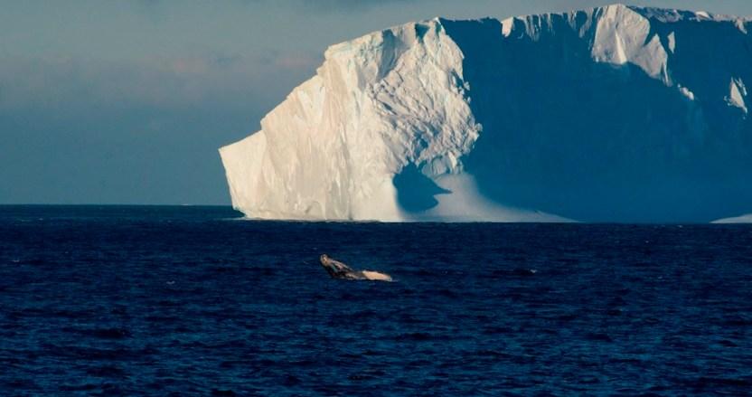 antartida - La Antártida y Groenlandia pierden hielo 6 veces más rápido que en los 90, concluyen científicos polares - #Noticias
