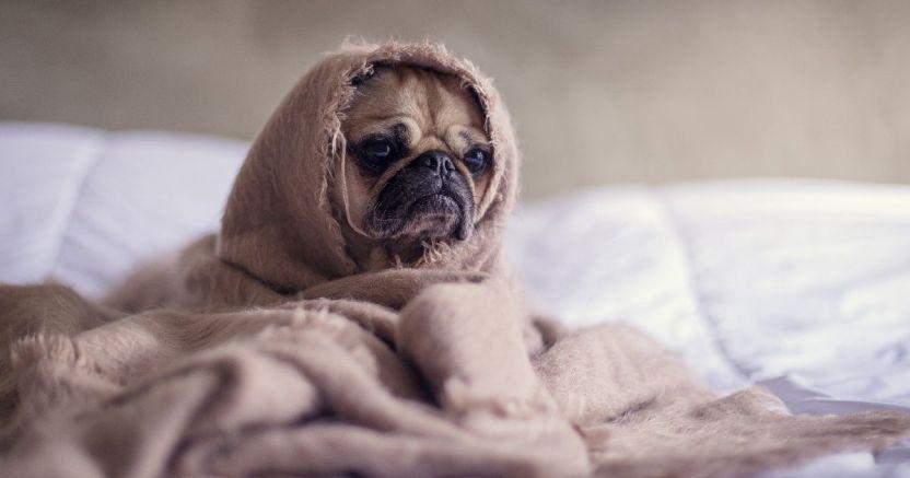 recomiendan no poner mascarillas a los perros.jpg 673822677 - Sugieren no poner mascarillas a perros para protegerlos del coronavirus