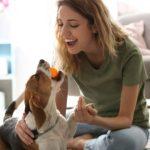Cuidados con las mascotas 660x330 - Población debe aplicar cuidados con las mascotas por el Covid-19 – Archivo Digital Colima
