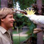 El único animal que aterrorizaba a Steve Irwin el cazador de cocodrilos - Noticias al momento