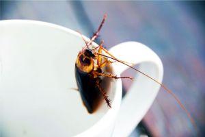 Los científicos no descartan que tengamos que alimentarnos con leche de cucaracha. Esperemos que estén bromeando - Tomar leche de cucaracha, la opción que la ciencia no descarta