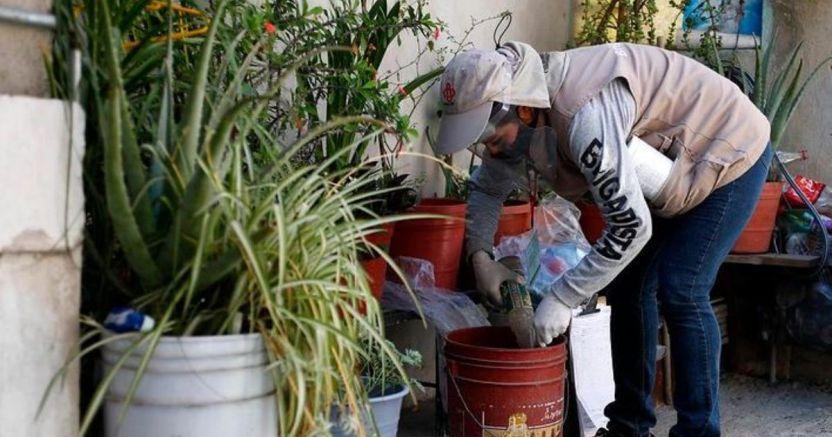 dengue 2 1 crop1590703228417.jpg 1899842566 - Peleará Jalisco contra 3 virus