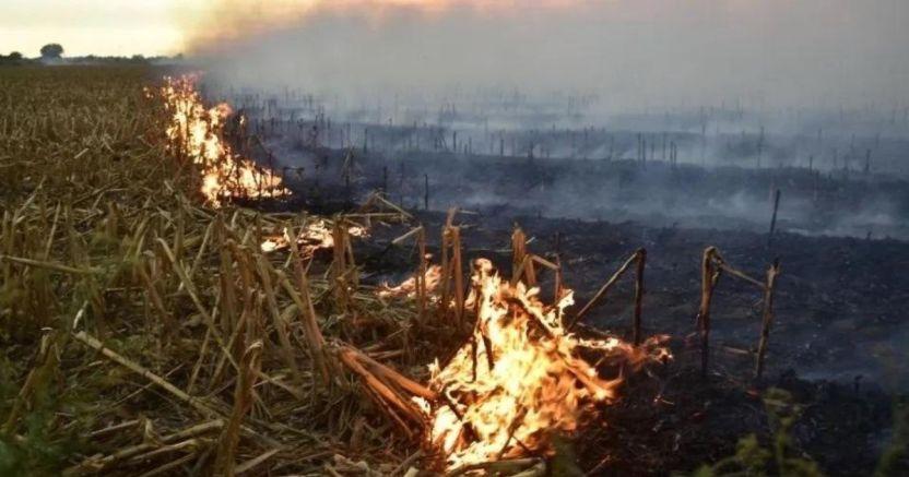 sin interxs los municipios de evitar la quema de soca jpg 219914347 crop1590544817665.jpg 673822677 - Llama SEDESU a Ayuntamientos a aplicar sanciones ejemplares en quema de soca en Sinaloa
