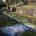 aguas - La UNAM llama a monitorear aguas residuales para detectar la presencia del virus SARS-COv-2