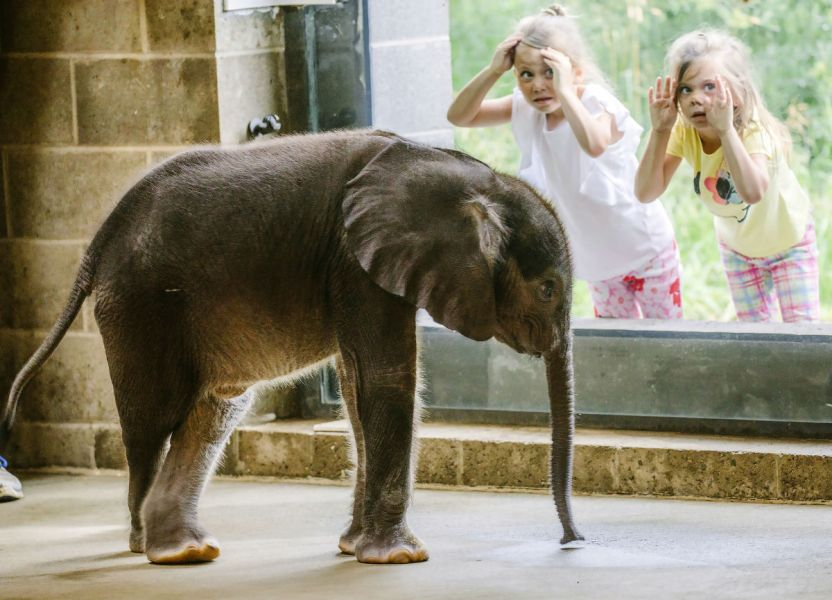 elefantito - El elefante, la estrella del Pet Film Festival Tepoztlán