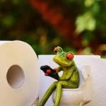 frog 1037252 960 720 crop1595367027104.jpg 673822677 - Laxantes naturales para evitar sufrir de estreñimiento y sentirse mejor