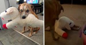 portada perro juguete  - Perro siempre se asegura de compartir su comida con su juguete favorito. Es un protector innato