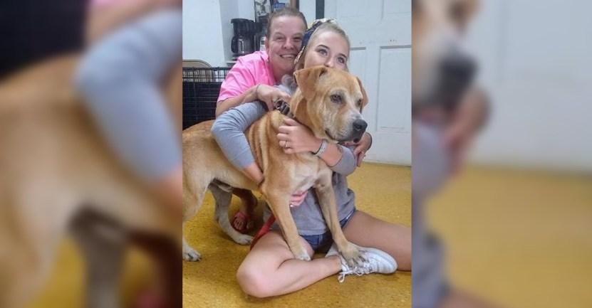 perro rescate apoyo - Lo rescataron, amarrado y con graves heridas, pero ahora da apoyo emocional. Ayuda a quienes lo aman