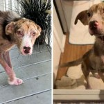 sarna aparecio perro perrito - Noticias al momento