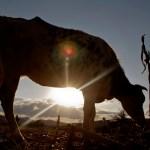 cam2 - Crece movimiento contra bombas antigranizo; agricultores desmienten a Barbosa