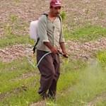 whatsapp image 2020 09 12 at 2 50 11 pm crop1599944368293.jpeg 673822677 - Iniciará la ocupación de jornaleros en el valle