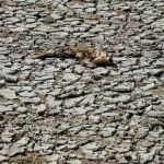 GettyImages 1228002727 - Qué le pasa a tu cuerpo cuando te deshidratas (y cuánto tiempo puedes aguantar sin agua)