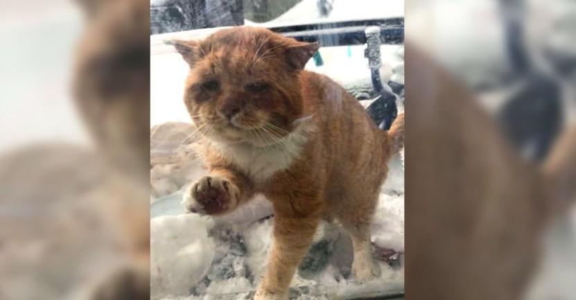 felino gato frio ventana entrar - Gato callejero toca la ventana de una mujer para rogar que lo dejara entrar. Ya no soportaba el frío