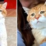 gato 3 patas triste  - Callejero con 3 patas y entristecido rostro encuentra un hogar lleno de felicidad. Su corazón sanó