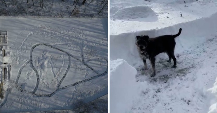 hombre creo laberinto para perros - Hombre creó un laberinto de nieve en su patio para sus 21 perros rescatados. Ellos lo disfrutan