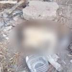 perrita - IMÁGENES FUERTES: Una perrita es hallada con golpes y huellas de abuso en un baldío de Ecatepec