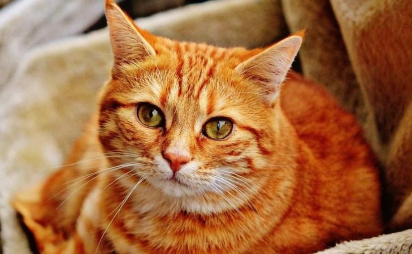 15 personas se contagian de coronavirus en fiesta de un gato crop1611613887436.jpg 242310155 - 15 personas se contagian de coronavirus en fiesta de un gato