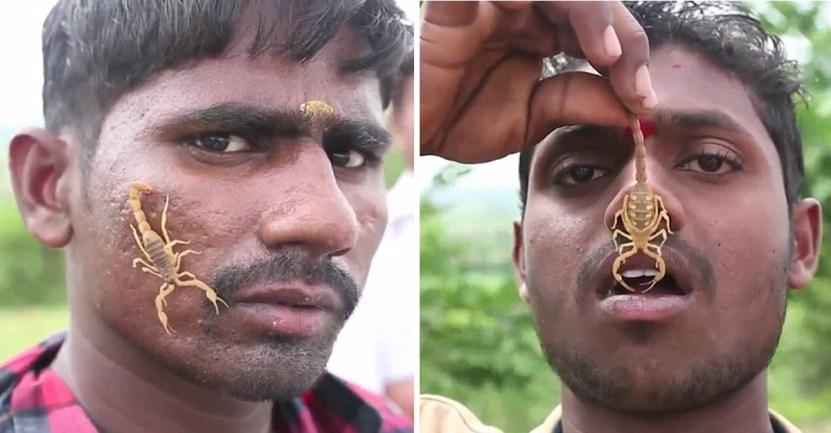 55 india escorpiones dios celebracion picadura peligro - En la India existe un pueblo donde las personas conviven con escorpiones. Los montan en sus rostros