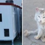 alcantarilla espana gatos001 1 - Voluntarios fabrican casitas para que los gatitos callejeros de España no pasen frío. Les dan calor