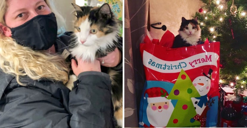 """gato casa navidad - Gato volvió a casa para Navidad después de 5 años perdido en la calle: """"Parece un milagro"""""""