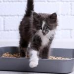 gato crop1612137303955.jpg 242310155 - Por qué los gatos deben de tener su caja de arena