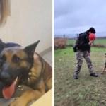 perro atado arbol policia - Lo dejaron atado a un árbol y ahora se convirtió en un perro policía. Es un ejemplo de superación